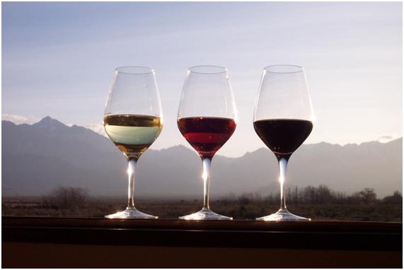 safra-vinho-importante4
