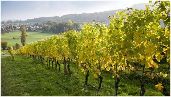 vinhosverdes1